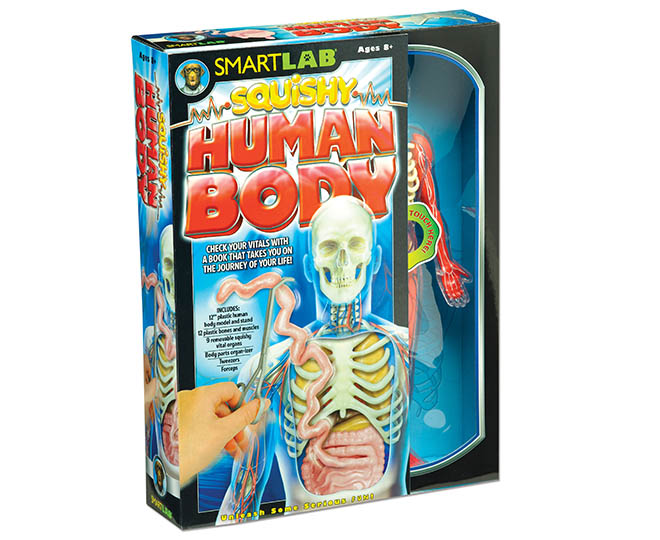 Smartlab Squishy Human Body Catch Com Au