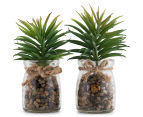 Set Of 2 6x12cm Leafy Succulents In Glass Jar 1