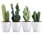 Set Of 4 7x23cm Cactus Succulents In Glass Jar 1