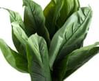 Cooper & Co. Artificial 85cm Dieffenbachia Plant - Green 4