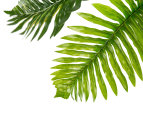 Botanica Artificial 45cm Fern Plant - Green 5