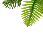 Botanica Artificial 75cm Fern Plant - Green 5