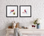 Set Of 2 Assorted Rosellas 35x35cm Canvas w/Black Frame 2