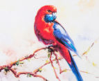 Set Of 2 Assorted Rosellas 35x35cm Canvas w/Black Frame 5