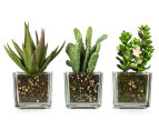 Set of 3 Artificial 16x7cm Succulents in Glass Vase - Green 1