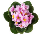 Set of 3 Artificial 21cm African Violets in Tin Pot - Pink 3