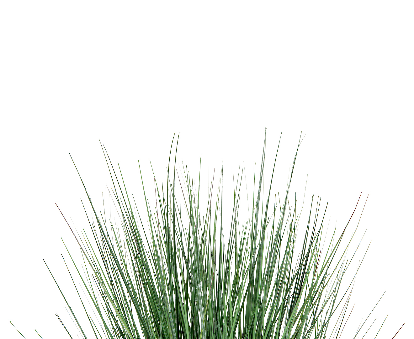 Botanica 56cm artificial pond grass plant spring green for Fake pond plants