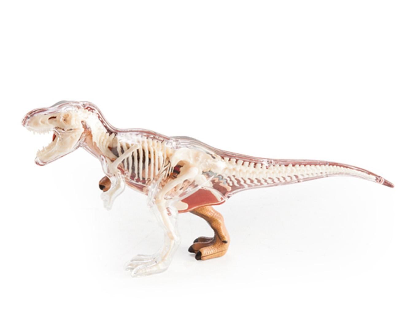 4D Vision - T-Rex anatomy model 9318051113442 | eBay