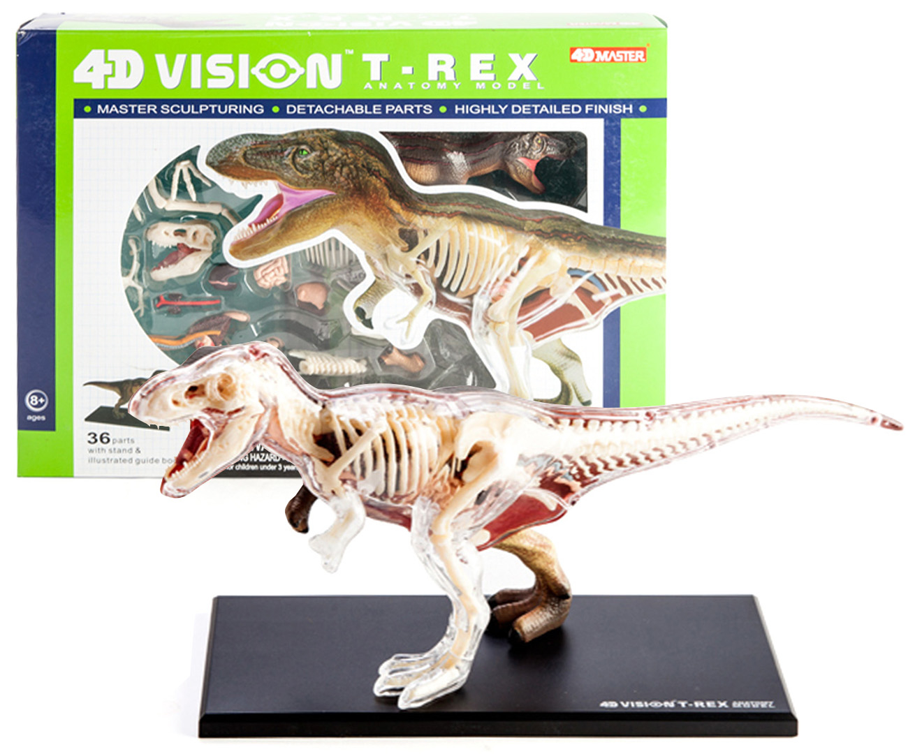 4d Vision T Rex Anatomy Model 9318051113442 Ebay