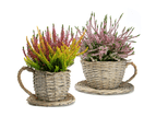 Set of 2 Willow Teacup Planters | M&W 1