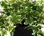 Botanica 76cm Light Green Ivy Artificial Plant 3