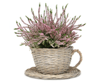 Set of 2 Willow Teacup Planters | M&W 3