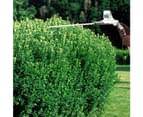 Swift 40V Cordless Pole Hedge Trimmer Kit - Include Battery And Charger 3