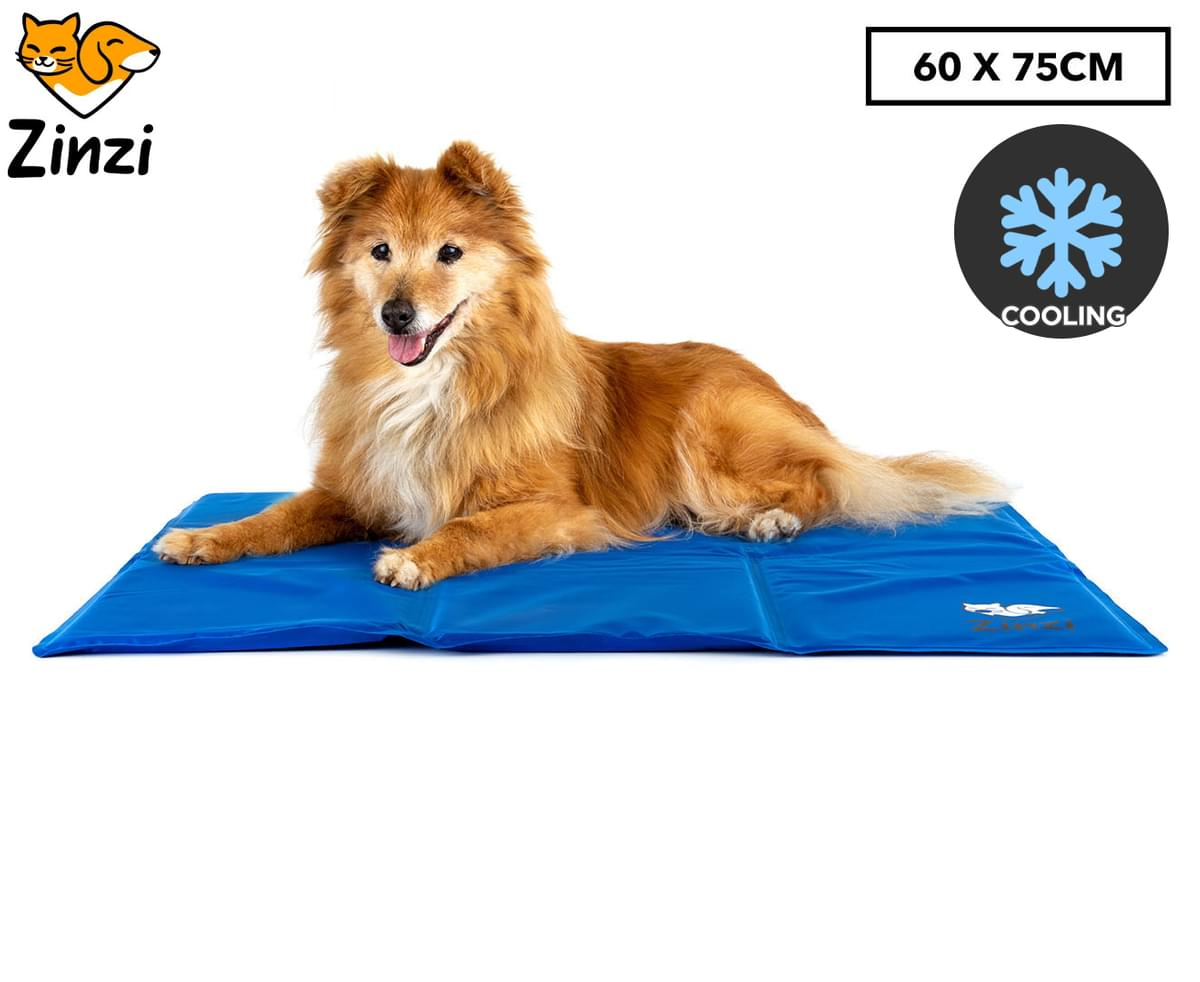 Dog relaxing on a blue cooling mat