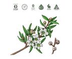 Koala Eco Natural Hand Sanitiser - Australian Tea Tree Leaf Essential Oil 500 ml 2